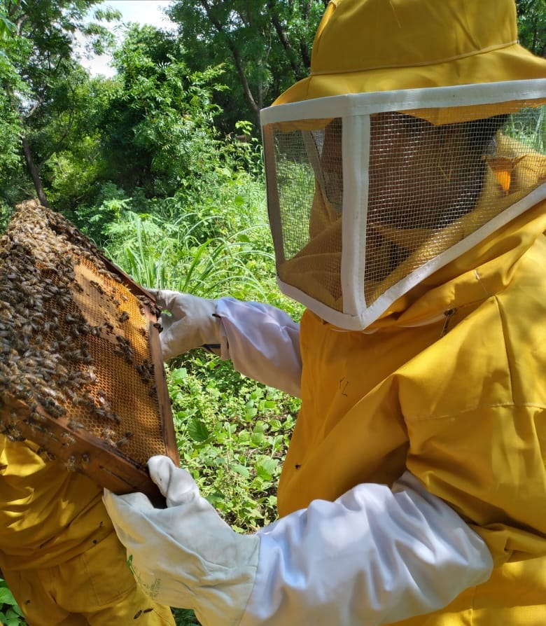A woman dressed in a yellow beekeeper's outfit checks on a honeycomb panel from a beehive.